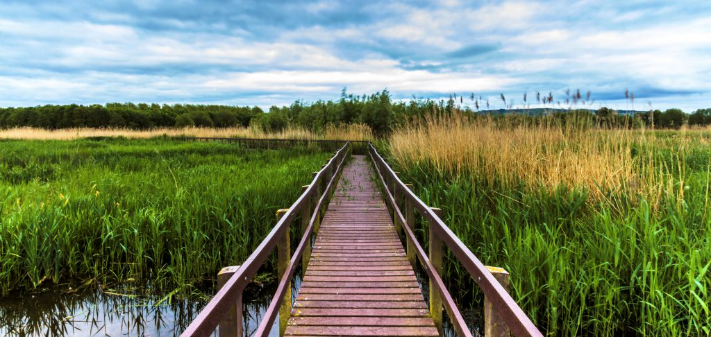"""Avon Meadows Community Wetlands"" by Geoff Moore licensed under CC BY-SA 4.0"
