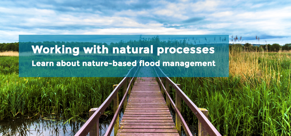 natural-processes-banner